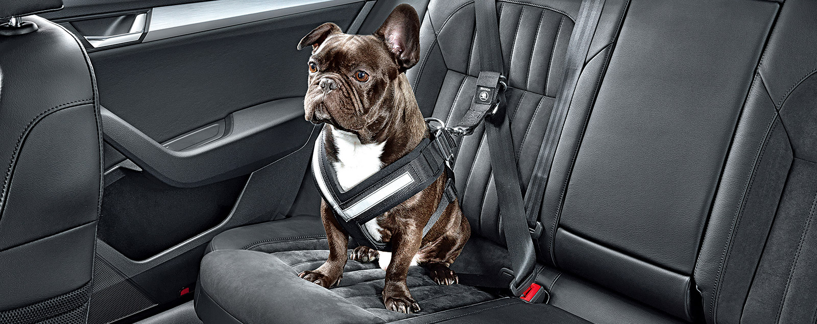 SKODA Dog Restraint